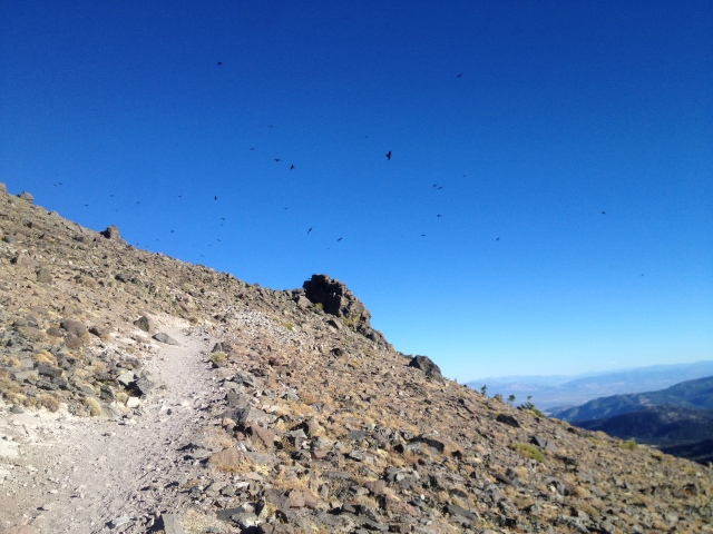 So many crows at the summit, I thought I was in a Hitchcock movie.