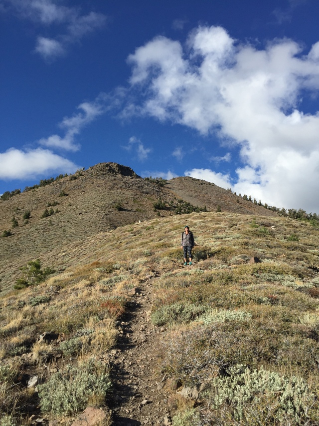 About to begin the final ascent to Rose Knob from the ridge line.